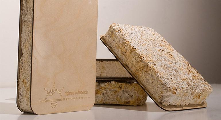 Mycelium mushrooms material