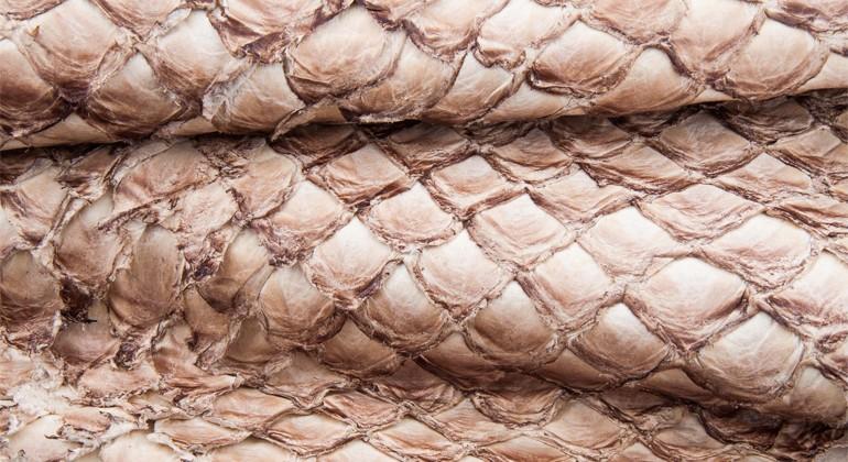 Pirarucu leather material