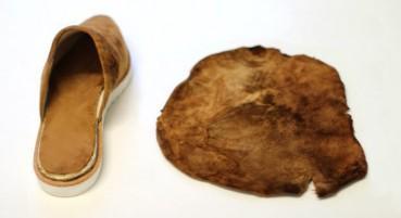 Materiale dai funghi